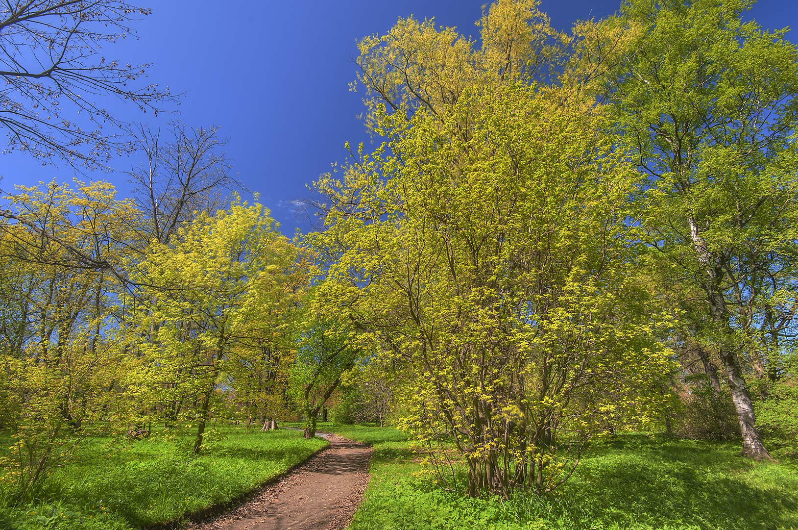 Alley in spring in Botanic Gardens of Komarov Botanical Institute. St.Petersburg, Russia