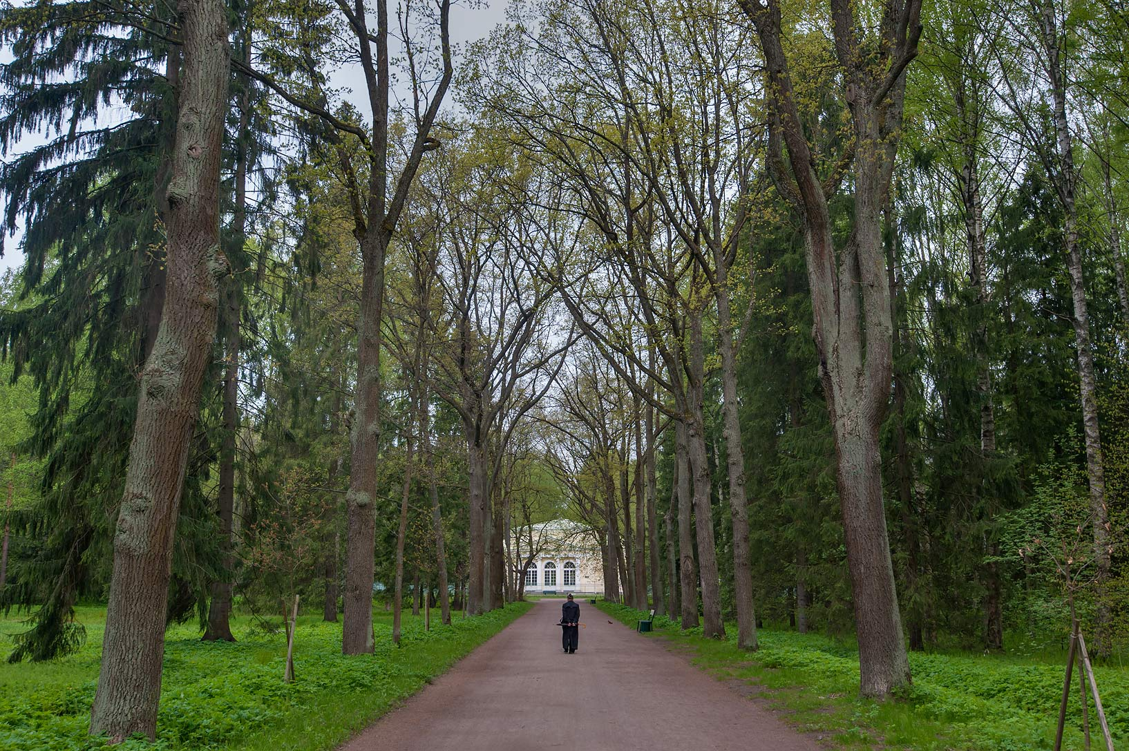 Alley of Pavlovsk Park. Pavlovsk, suburb of St.Petersburg, Russia