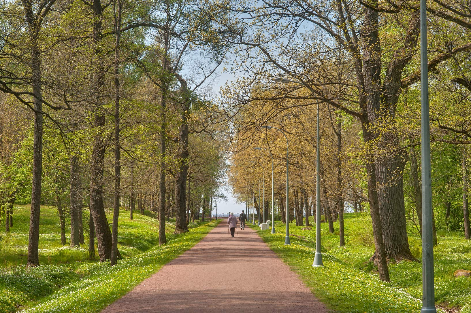 Oak alley towards the gulf in Dubki Park. Sestroretsk, a suburb of St.Petersburg, Russia