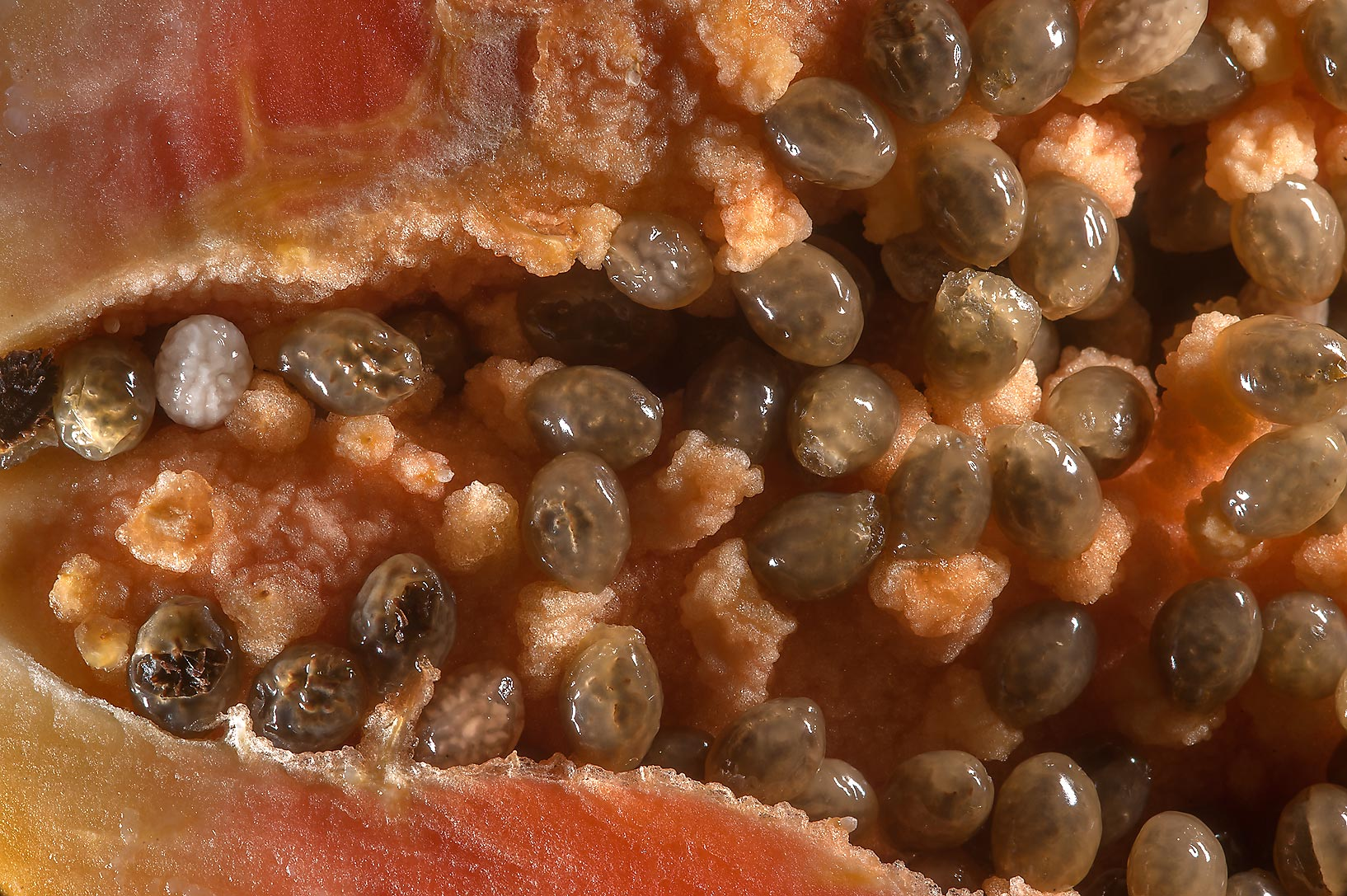 Seeds in a cross section of a fruit of Carica...Carrefour Supermarket. Doha, Qatar