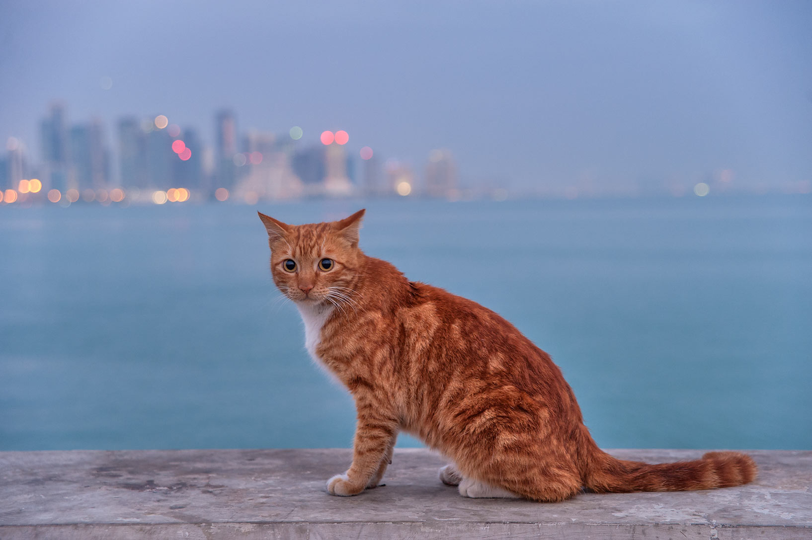 Brown cat sitting at the end of fishing pier near Corniche at morning. Doha, Qatar