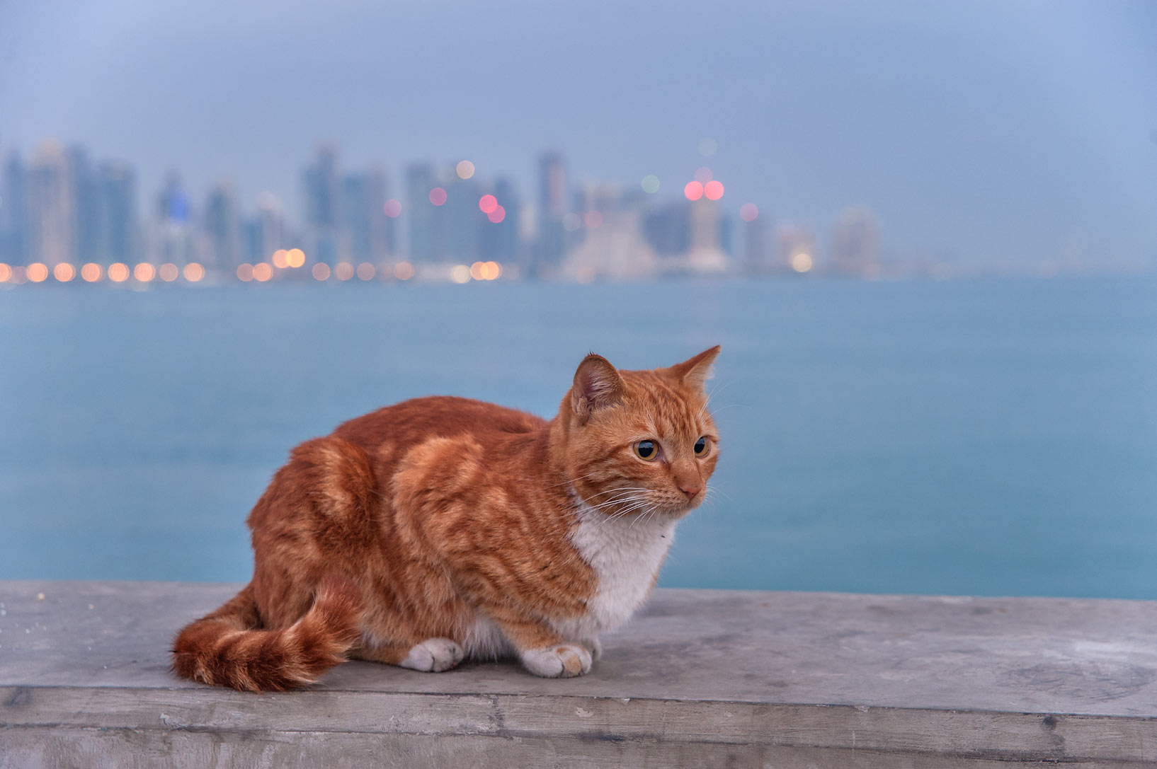 Brown cat sitting on stone barrier at the end of fishing pier near Corniche. Doha, Qatar