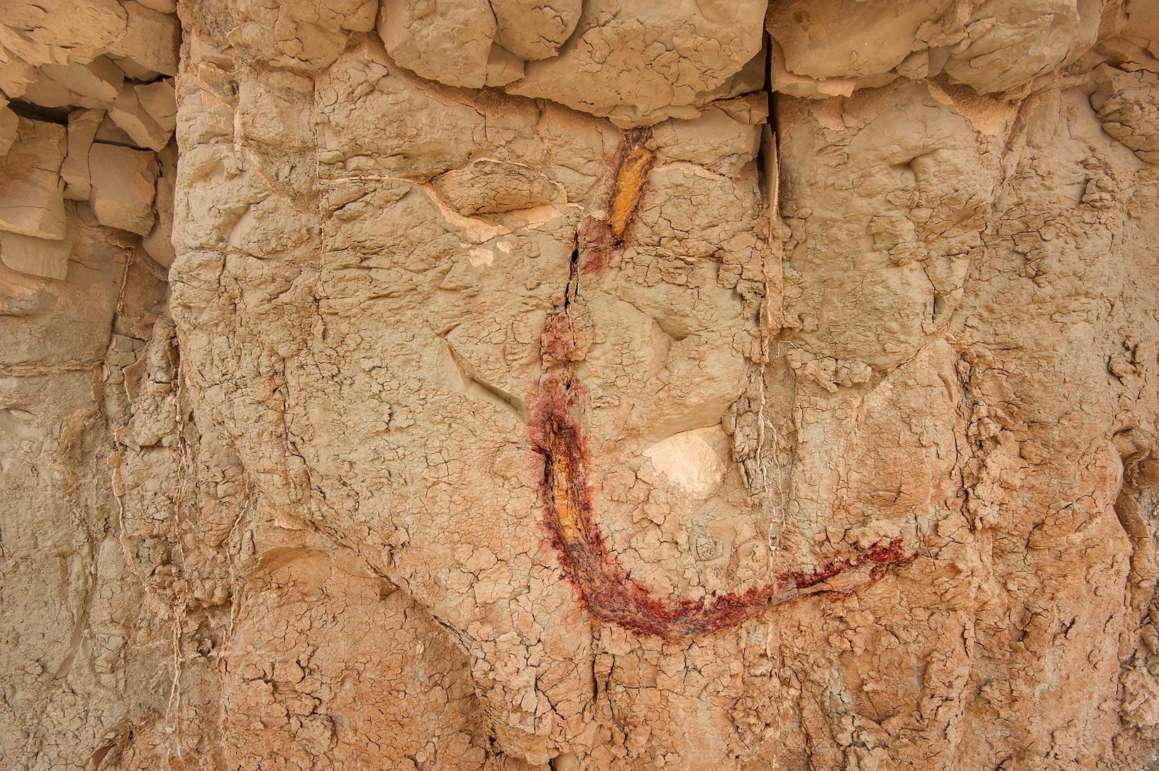 Exposed fossilized roots on limestone cliffs in...Reserve near Abu Samra. Southern Qatar