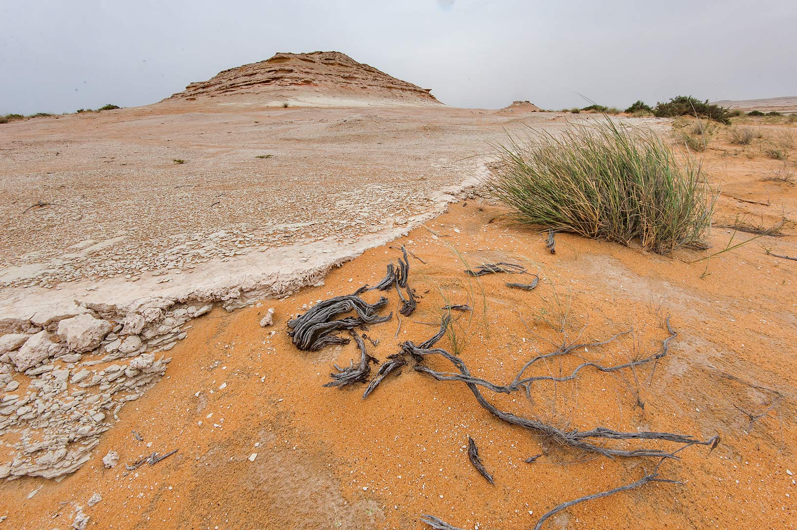 Dead wood at the edge of a plateau at the foot of...Reserve near Abu Samra. Southern Qatar