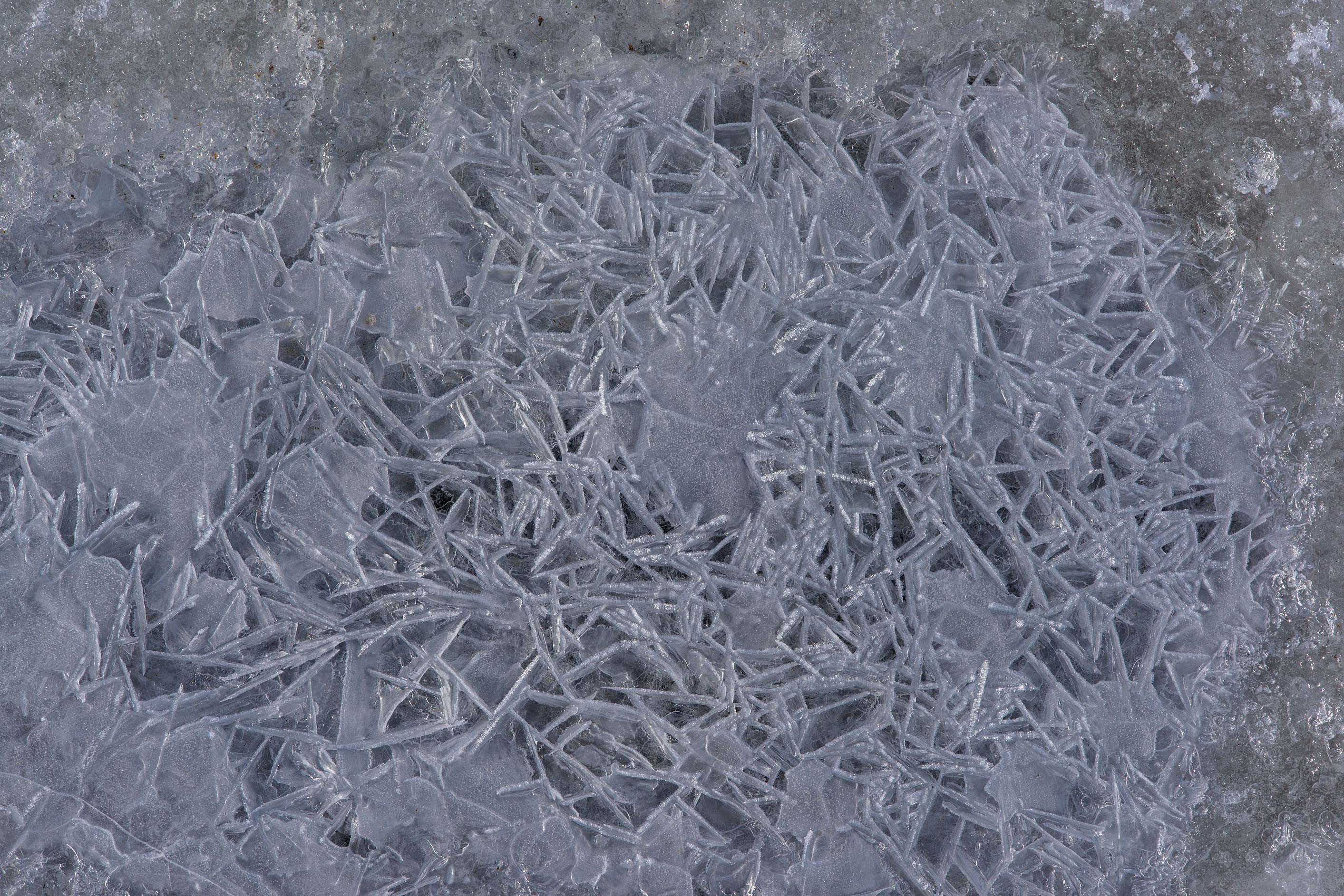 Lacy ice crystals on frozen Gulf of Finland in Solnechnoe, west from St.Petersburg. Russia