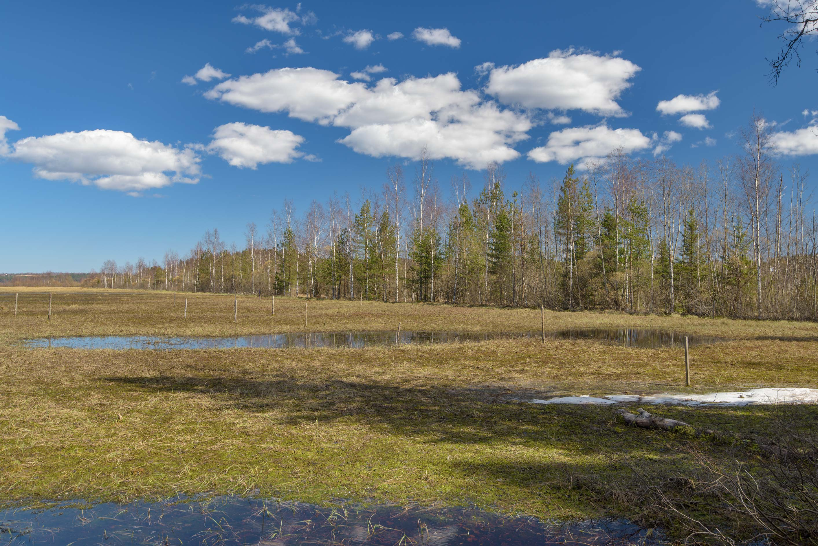Marsh of Kavgolovskoe Lake, near Toksovo. North from St.Petersburg, Russia