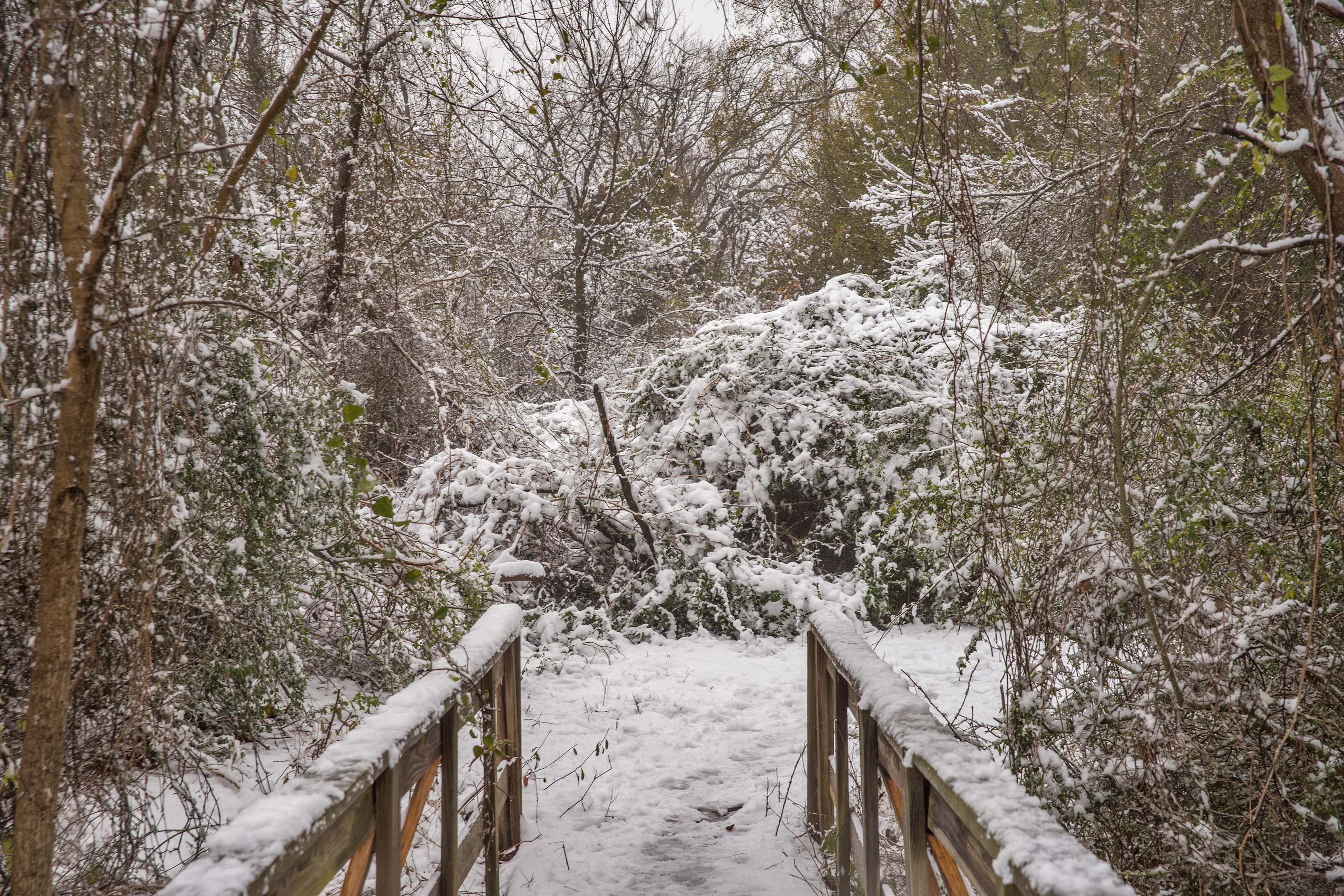 Foot bridge in snow in Bee Creek Park. College Station, Texas